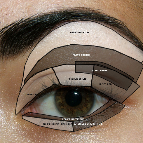Tutorial reference eye diagram parts of the eye basic eye makeup ccuart