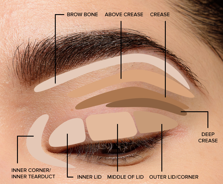 Makeup Tips for Beginners: Eyeshadow Placement & Eye Makeup Diagram