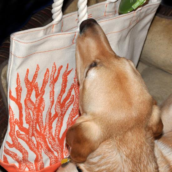 beachbag003