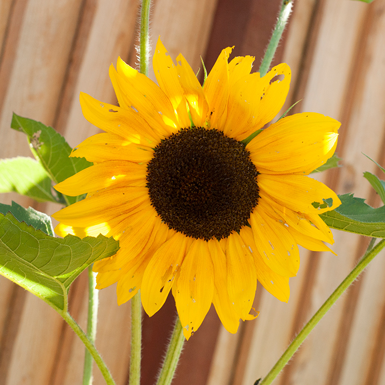 A Trio of Sunflower-Inspired Color Stories